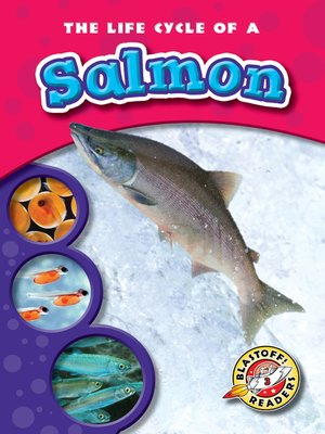 cover image of The Life Cycle of a Salmon