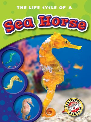 cover image of The Life Cycle of a Sea Horse