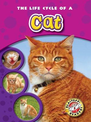 cover image of The Life Cycle of a Cat