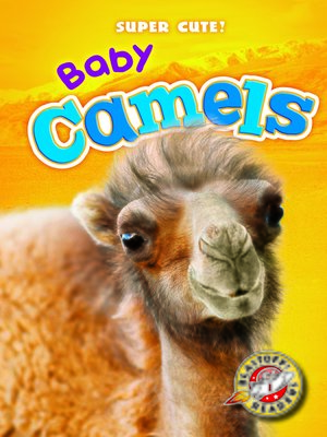 cover image of Baby Camels