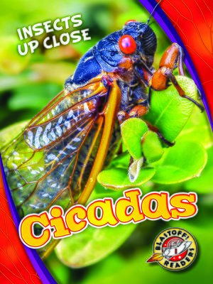 cover image of Cicadas