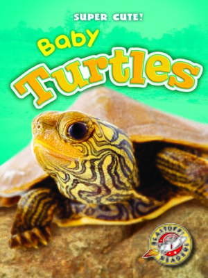 cover image of Baby Turtles