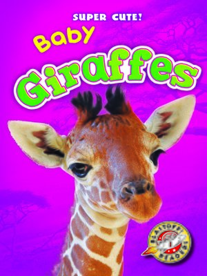 cover image of Baby Giraffes