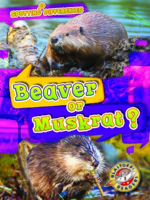 cover image of Beaver or Muskrat?