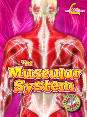 cover image of The Muscular System