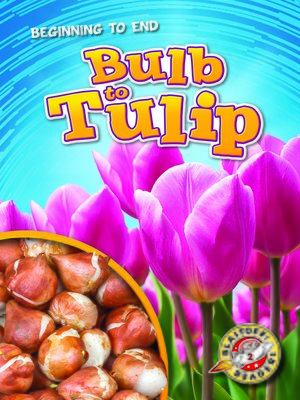 cover image of Bulb to Tulip