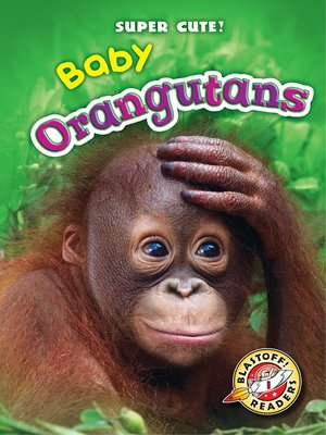 cover image of Baby Orangutans