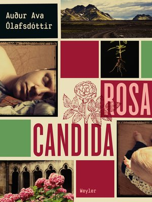 cover image of Rosa candida