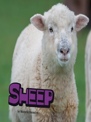 cover image of Sheep