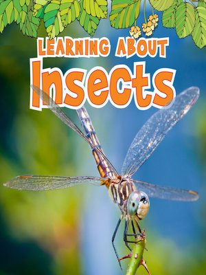 cover image of Learning About Insects