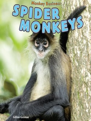 cover image of Spider Monkeys
