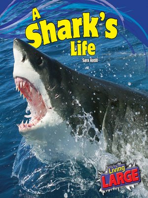 cover image of A Shark's Life