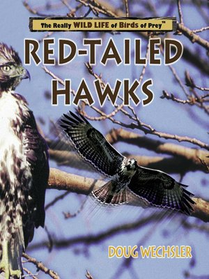 cover image of Red- Tailed Hawks