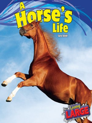 cover image of A Horse's Life