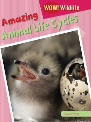 cover image of Amazing Animal Life Cycles