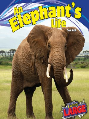 cover image of An Elephant's Life