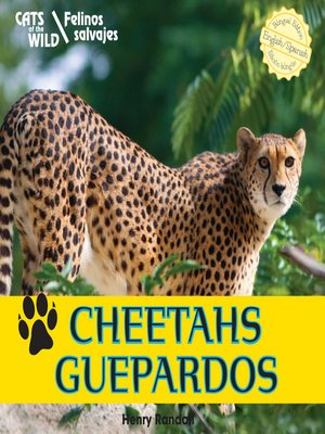 cover image of Cheetahs / Guepardos
