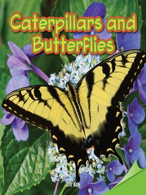 cover image of Caterpillars and Butterflies