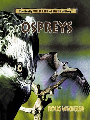cover image of Ospreys