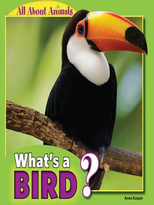 cover image of What's a Bird?