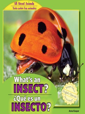 cover image of What's an Insect? / ¿Qué es un insecto?