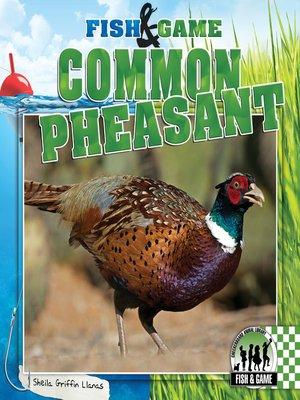 cover image of Common Pheasant