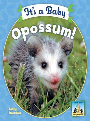cover image of It's a Baby Opossum