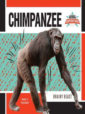 cover image of Chimpanzee: Brainy Beast