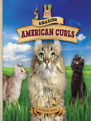 cover image of Amazing American Curls