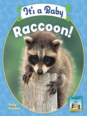 cover image of It's a Baby Raccoon