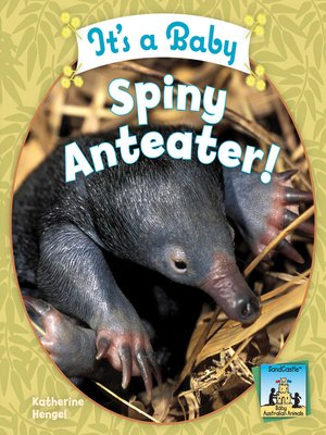 cover image of It's a Baby Spiny Anteater!