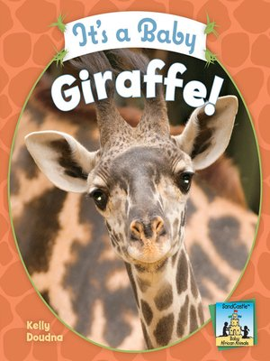 cover image of It's a Baby Giraffe!