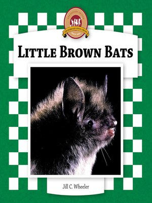 cover image of Little Brown Bats