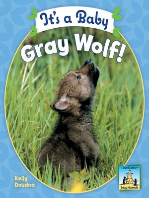 cover image of It's a Baby Gray Wolf