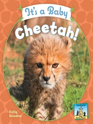 cover image of It's a Baby Cheetah!