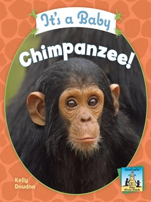 cover image of It's a Baby Chimpanzee!