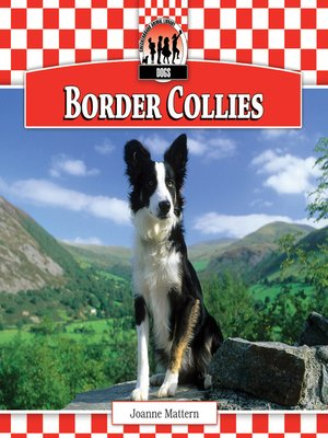 cover image of Border Collies
