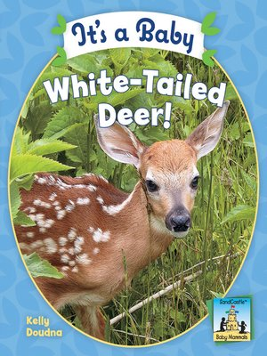 cover image of It's a Baby White-Tailed Deer