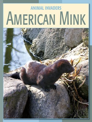 cover image of American Mink