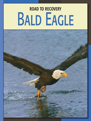 cover image of Bald Eagle