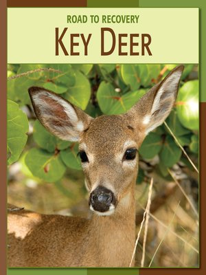 cover image of Key Deer