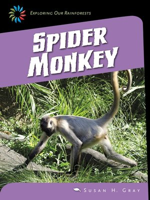 cover image of Spider Monkey