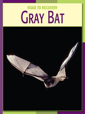 cover image of Gray Bat