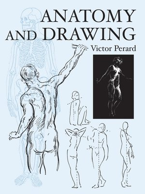 cover image of Anatomy and Drawing