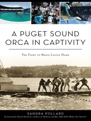 cover image of A Puget Sound Orca in Captivity