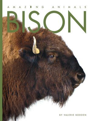 cover image of Bison