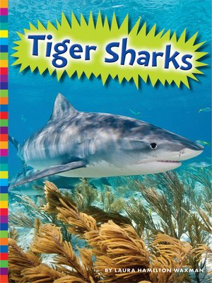cover image of Tiger Sharks