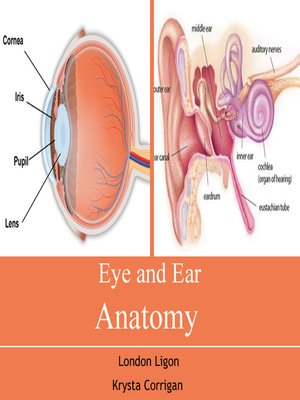 cover image of Eye and Ear Anatomy