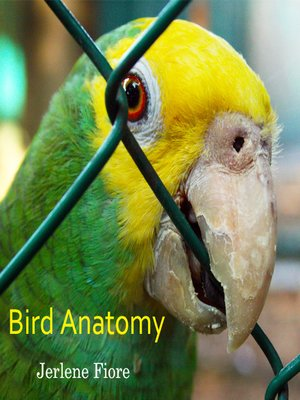 cover image of Bird Anatomy
