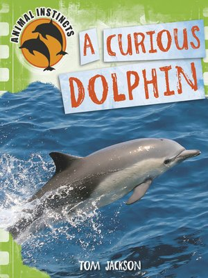 cover image of A Curious Dolphin